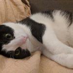 pair Sales Associate Jess's cat